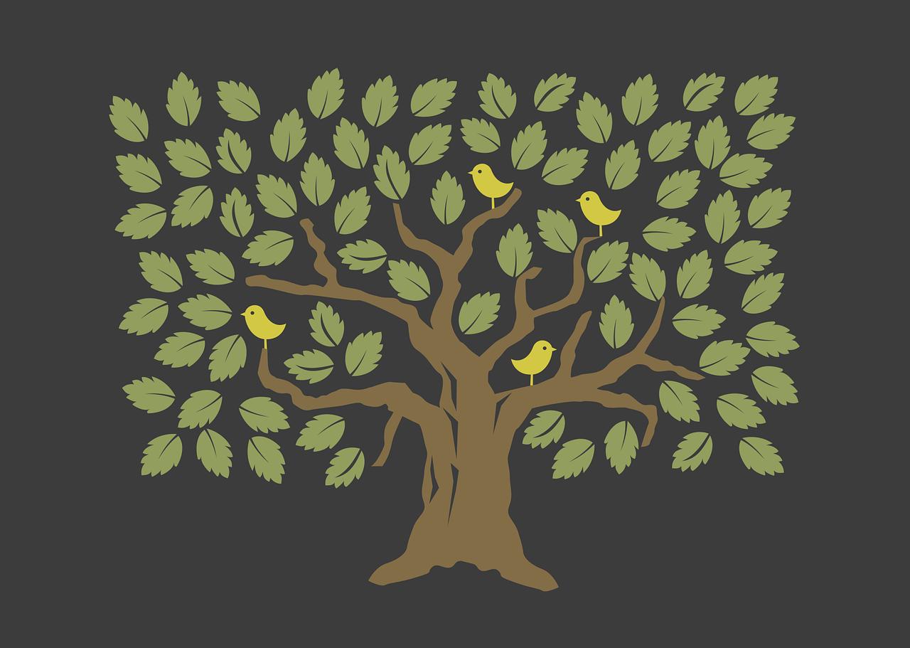 Baumpflanzen als CO2 Kompensation